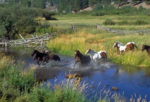 horses water-78223_1920