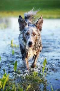 wasser hund 520246_1920