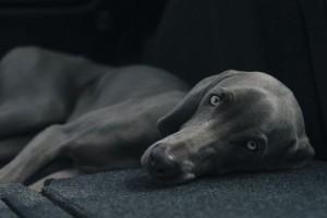 Hund Gutschein Slider