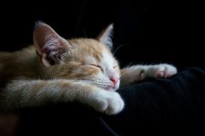 Katze Blog Slider