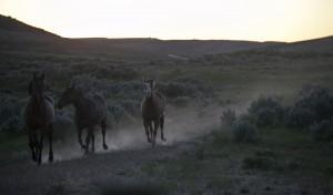 Pferde Therapie Slider