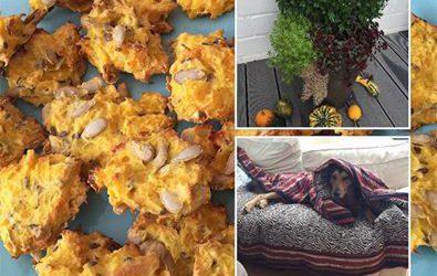 Rezept: Glutenfreie Kürbis-Leckerlis für Hunde