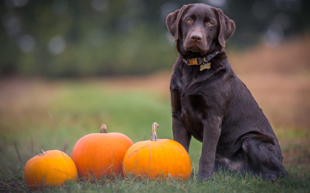 Oktober-Angebot